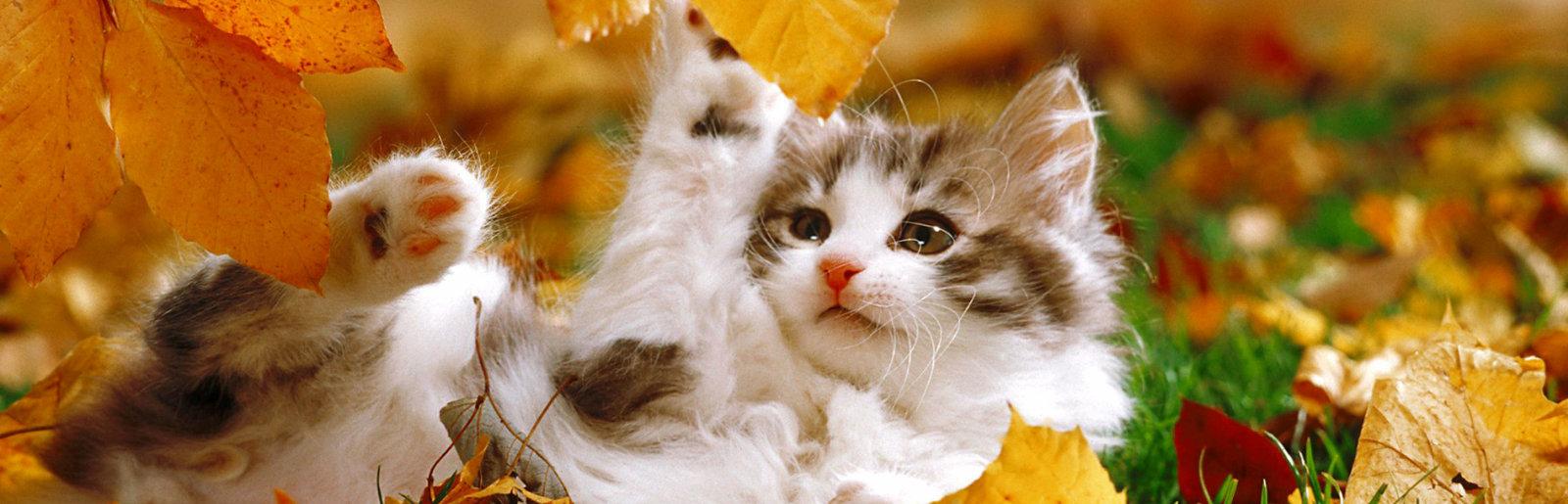 Těsná bílá dívka kočička